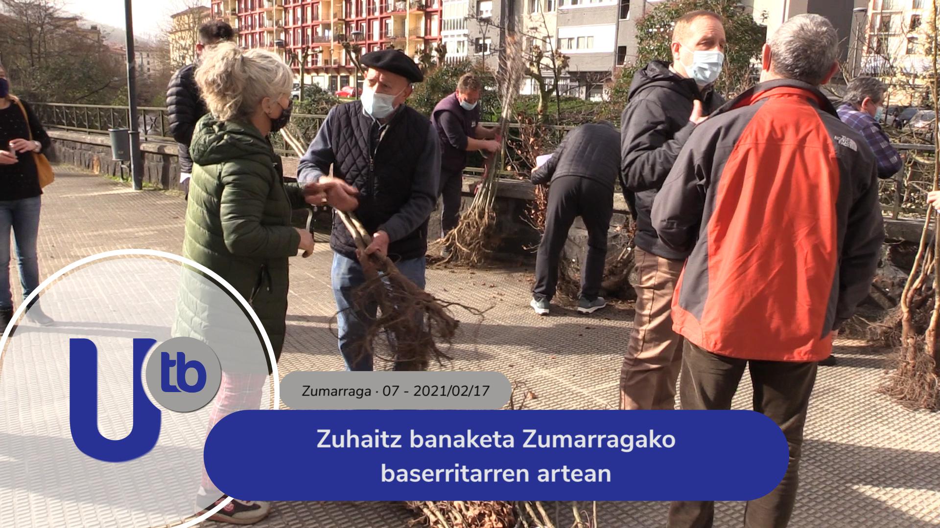 Zuhaitz banaketa Zumarragako baserritarren artean / Reparto de árboles entre los baserritarras de Zumarraga